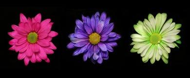blommor tre gånger Royaltyfri Foto