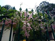 Blommor trevligt Bi arkivbild