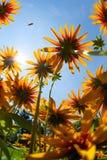 Blommor underifrån 2573 royaltyfria foton