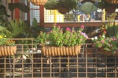 Blommor utanför Royaltyfri Foto