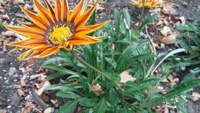 blommor värme Arkivfoton