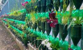 Blommor växer i plast- flaskor med botten som klipps av som gammal trädgård nära ett staket Arkivbild