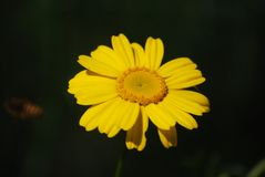Blommor, växter, träd, landskap, natur, färger och lycka arkivfoto