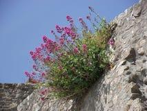 Blommor vaggar på Arkivbild