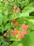 Blommor vid lissa Royaltyfria Foton