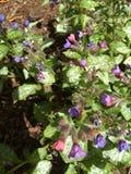 Blommor vid lissa Royaltyfri Foto