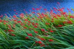 Blommor vid sjökanten Royaltyfri Bild