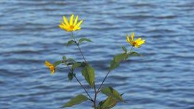 Blommor vid sjön arkivfilmer
