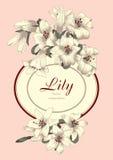 Blommor vita liljar Tappningvektorillustration Klassiskt kort Gravyr med den blom- modellen Botan stock illustrationer