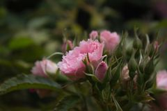 Blommorna äger rum som vårt liv Arkitektur i natur Royaltyfria Bilder