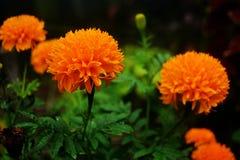 Blommorna är gula royaltyfri foto