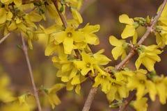 Blommorna är vid liv och nya Arkivfoton