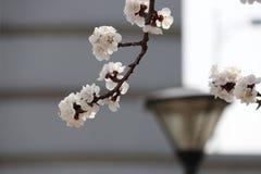 Blommorna är vid liv och nya Royaltyfri Bild