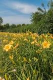 Blommorna Arkivfoton