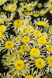 Blommorna Royaltyfri Fotografi