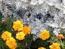 Blommorna arkivfoto