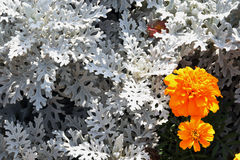 Blommorna Royaltyfria Bilder