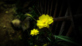 Blommorna arkivbilder