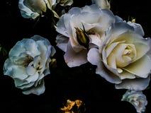 Blommorna Fotografering för Bildbyråer