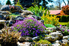 Blommorna av botaniska trädgården, Bulgarien, Balchik arkivbild