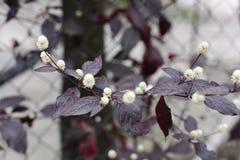 Blommorna bredvid staketet Royaltyfria Foton