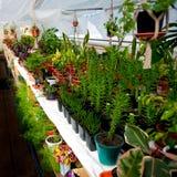 Blommorna i växthuset Fotografering för Bildbyråer