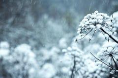 Blommorna täckas med is, snö arkivfoto
