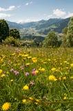 Blomningäng i de Tyrolean fjällängarna i Österrike royaltyfri fotografi