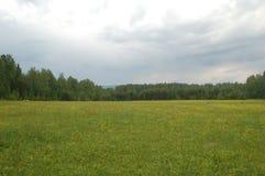 Blomningäng på en molnig dag Fotografering för Bildbyråer