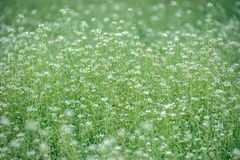 Blomningängblommor Fotografering för Bildbyråer