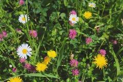 Blomningörter i det gröna gräset Royaltyfri Foto