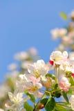 blomning Arkivfoto