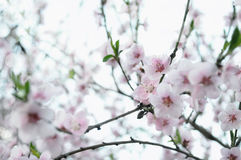 blomning Royaltyfri Fotografi