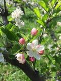 blomning Royaltyfria Foton