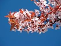 blomning Royaltyfri Foto