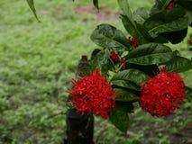blomning Royaltyfria Bilder