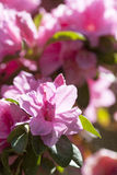 blomning fotografering för bildbyråer