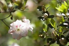 blomning arkivbilder