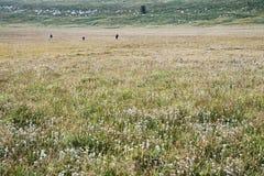 Blomning av grässlätten Arkivfoto