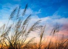 Blomning av gräs Arkivbilder