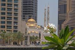 Blomning av palmträdet över moské Royaltyfri Fotografi