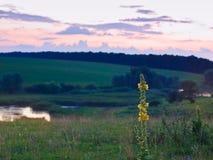Blomning av verbascum- eller sammetväxten i ett härligt herde- landskap för sen afton för sommar Fotografering för Bildbyråer