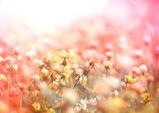 Blomning av vit växt av släktet Trifolium i äng royaltyfri bild