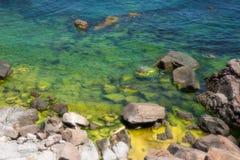 Blomning Black Sea Arkivbilder