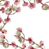 Blomning eller Sakura för härlig vattenfärg körsbärsröd i vår isolerade filialer och rosa blommor på vit bakgrund royaltyfri illustrationer
