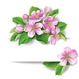 Blomning för Apple träd vektor illustrationer