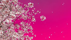 blomning för körsbärsrött träd för 3D sakura och fallande kronblad