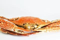 blomning för krabba för 19 kan 2011 bakgrundsblomningar den tagna rosa soften för fotoet Arkivfoto