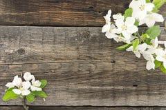 Blomning för våräppleträd på lantlig träbakgrund Royaltyfria Foton