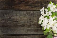 Blomning för våräppleträd på lantlig träbakgrund med utrymme Royaltyfria Foton